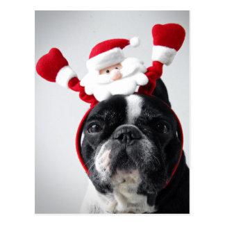 Merry Christmas portrait offrench bulldog Postcard