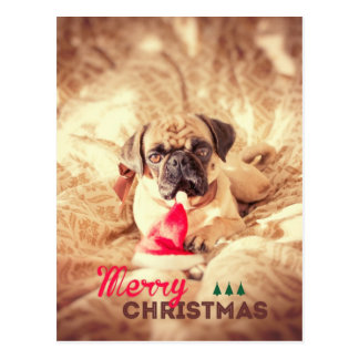 Merry Christmas Pug Postcard