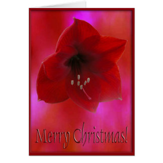 Merry Christmas/ Red Amarilla Greeting Card