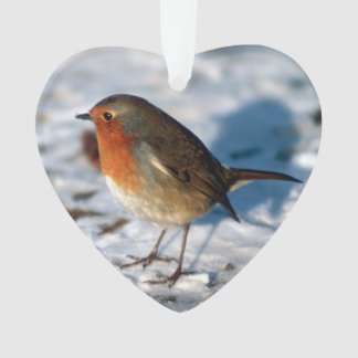 Merry Christmas Robin in the Snow