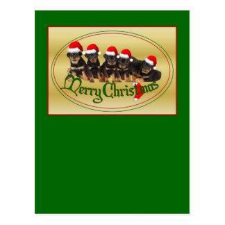 Merry Christmas Rottweiler Puppies Postcard