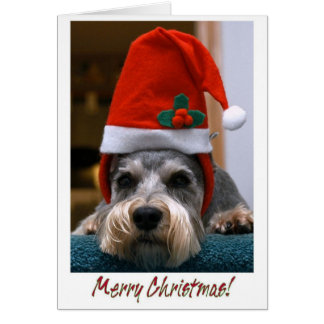 Merry Christmas Schnauzer Cards