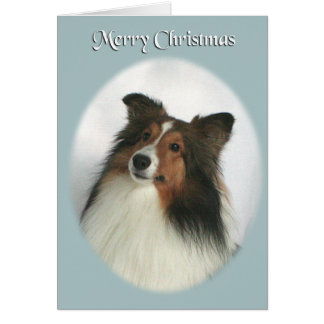 Merry Christmas Sheltie Card