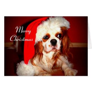 Merry Christmas Spaniel Greeting Card