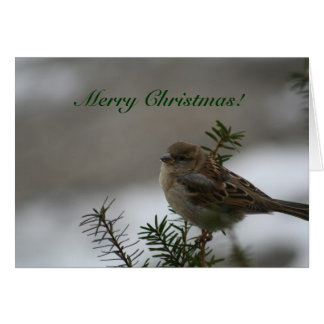 Merry Christmas!  Sparrow! Card