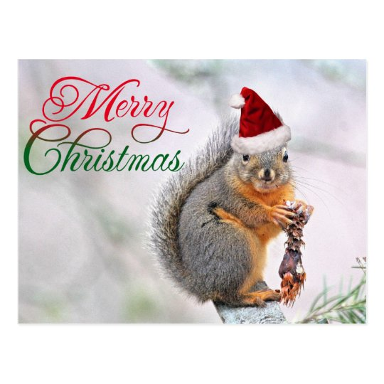 Merry Christmas Squirrel Postcard