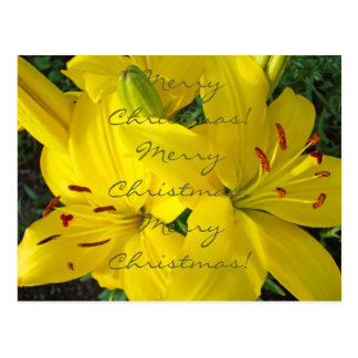 Merry Christmas to You postcards Yellow Lilies