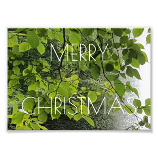 Merry Christmas Trees Water Floral Photography Art Photo
