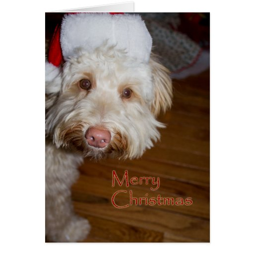 Merry Christmas  w/a labradoodle in a Santa hat Cards