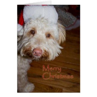 Merry Christmas  w/a labradoodle in a Santa hat Greeting Card