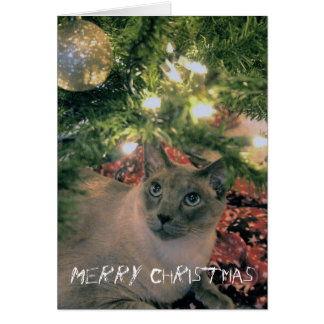 Merry Christmas, where's my present? Greeting Card