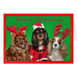 Merry Christmas With Three King Charles Spaniels Greeting Card