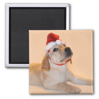 Merry Christmas - Yellow Lab Fridge Magnets