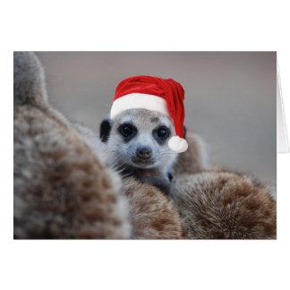 Merry Meerkat Christmas - Seasons greetings 2 Card