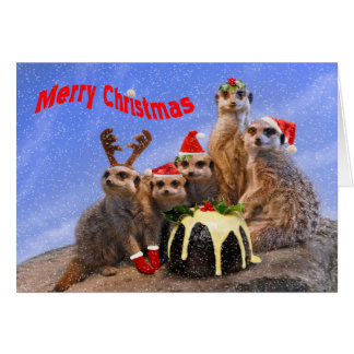 Merry Meerkats Christmas Card