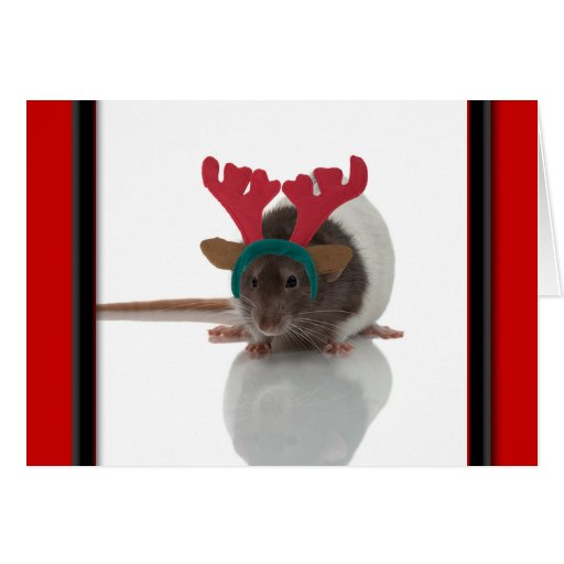 Merry Ratmas Cards