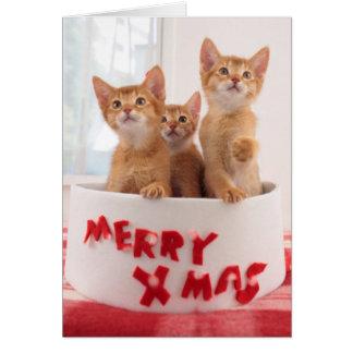 Merry Xmas Kitties Greeting Card