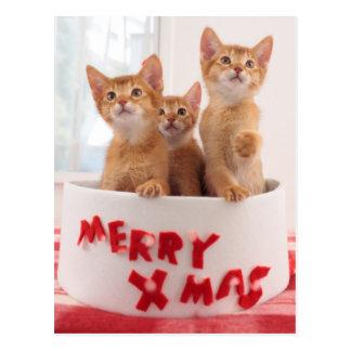 Merry Xmas Kitties Postcard