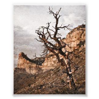 Mesa Verde Print