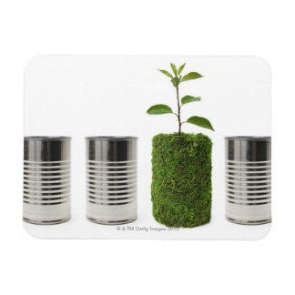 Metal cans and new seedling growth showing magnet