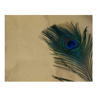 Metalic Gold Peacock Feather Postcard