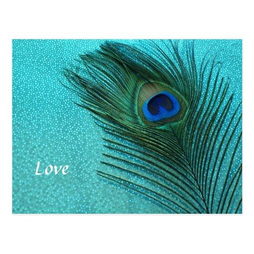 Metallic Aqua Blue Peacock Feather Postcards