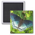 Metallic blue butterfly