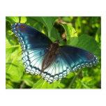 Metallic blue butterfly postcard