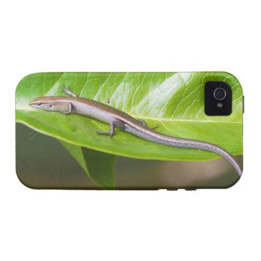 Metallic Cool Skink Niveoscincus Metallicus Vibe iPhone 4 Case