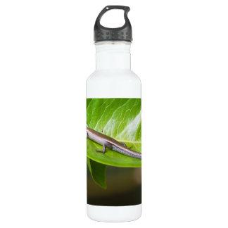 Metallic Cool Skink Niveoscincus Metallicus 710 Ml Water Bottle