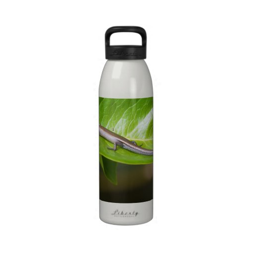 Metallic Cool Skink Niveoscincus Metallicus Water Bottles