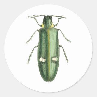 Metallic Wood-Boring Beetle Round Sticker