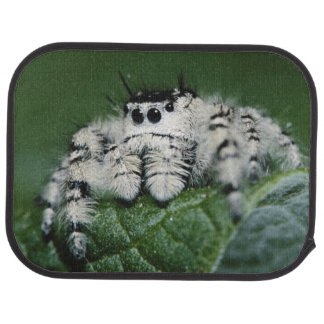 Metaphid Jumping Spider Car Mat