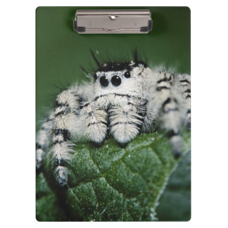 Metaphid Jumping Spider Clipboard