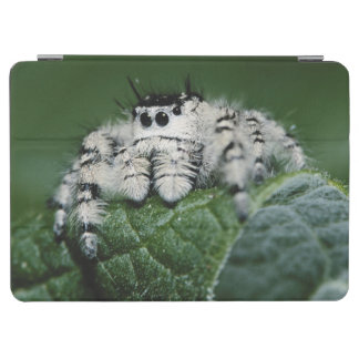 Metaphid Jumping Spider iPad Air Cover