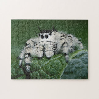 Metaphid Jumping Spider Jigsaw Puzzle