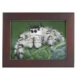 Metaphid Jumping Spider Keepsake Box