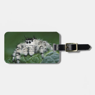 Metaphid Jumping Spider Luggage Tag