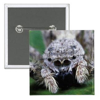 Metaphid Jumping spider Metaphidippus sp) 15 Cm Square Badge