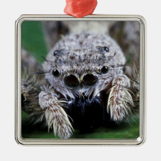 Metaphid Jumping spider Metaphidippus sp) Christmas Ornament