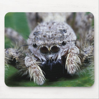 Metaphid Jumping spider Metaphidippus sp) Mouse Pad