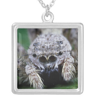 Metaphid Jumping spider Metaphidippus sp) Silver Plated Necklace