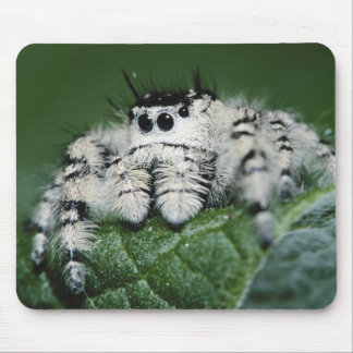 Metaphid Jumping Spider Mouse Pad
