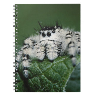 Metaphid Jumping Spider Notebook