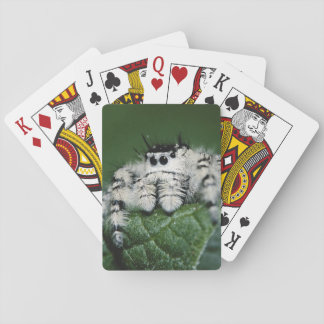 Metaphid Jumping Spider Playing Cards