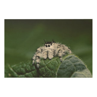 Metaphid Jumping Spider Wood Wall Art