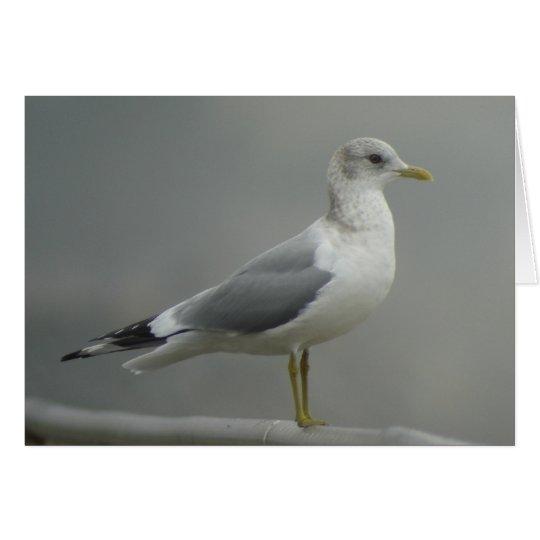 Mew Gull Card