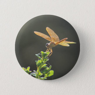 Mexican Amberwing Dragonfly Button