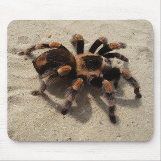 Mexican Flameknee Tarantula Spider Mouse Mat