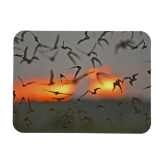 Mexican Free-tailed Bats Magnet